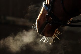 Image of horse breathing
